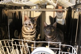 Rajah and Monkey in the dishwasher, hoping for a quick wash maybe?