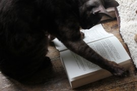 Monkey is a silver-smoke, here she is enjoying a book. Bengals are extremely clever cats...