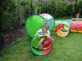 This is a photo of Freya and Max, two lucky Bengals having fun at their new home in their very own outside adventure playground.
