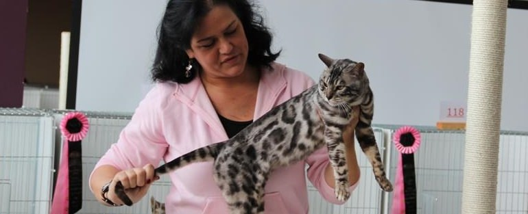 RW SGCH Silverstorm The Maharajahs Cat (2)