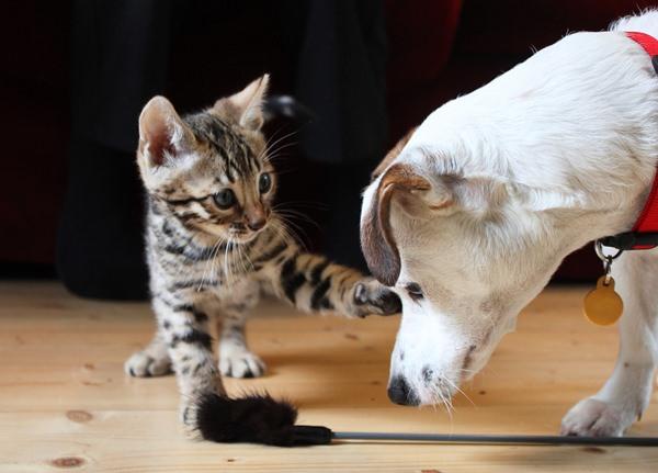 رفتار گربه با حیوانات دیگر