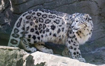 Snowleopard - slider