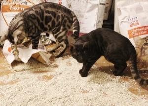 Silverstorm cat litter (2)