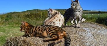 17 cats